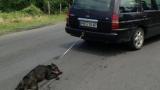 Извергът Райчо Иванов пак в ареста, погребал влаченото куче