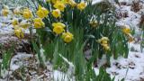 Сняг утре, слънце по Великден
