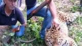 Вижте щастливия убиец на ягуара Алонсо! (СНИМКИ 18+)