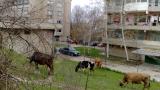Жалбоподател №1 на България води над 30 дела