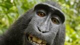 Маймуна осъди фотограф и го остави без пукната пара!