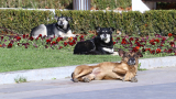 Кой трови кучета из парковете на София? (ВИДЕО)