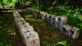 Мексиканските морски пехотинци откриха нещо рекордно, заровено на 4 метра в гориста местност (ВИДЕО)
