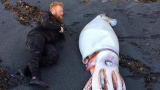 Ще сънувам кошмари! 4-метрово чудовище втрещи колоездачи на плаж (СНИМКИ)