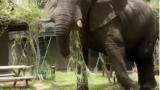 Слон нападна и уби германска туристка в Зимбабве (ВИДЕО)