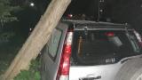 Ужас в Пловдив! Над 10-метрото дърво падна върху джип (ВИДЕО)