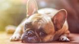 Установиха причините за доброто здраве на собствениците на кучета
