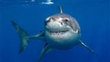 Уникално: Осемгодишно момче хвана 314-килограмова акула ВИДЕО