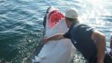 Чудо: Рибар спаси 6-метрова бяла акула и тя не спира да му благодари всеки ден ВИДЕО