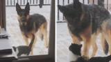 Куче успокои любвеобилна котка и накара мрежата да се смее ВИДЕО