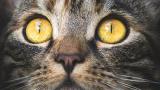 Котките масово се заразили с коронавирус в Ухан