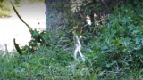 Пенсионирана учителка извика приятели да гледат секс с 3-метрови кралски кобри ВИДЕО