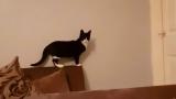 Мрежата прегря заради ВИДЕО с домашна котка