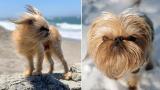"""Вечно недоволно"" кученце стана звезда на Instagram ВИДЕО"