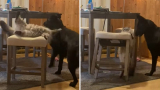 Мигновена карма: котарак удари куче и веднага бе наказан ВИДЕО