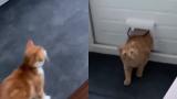Тайната среща на котка и уличен котарак бе запечатано на ВИДЕО