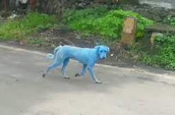 Затвориха завода за сини кучета (ВИДЕО)