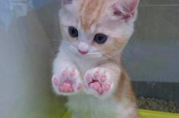 За по-хубав ден: СНИМКИ на лапички на сладки котета