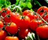 БАБХ обясни крие ли се страшна зараза в доматите
